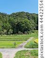 農村風景早期的秋天鄉下公路 44422554