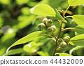 도토리, 열매, 과실 44432009