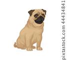 dog pug animal 44434841