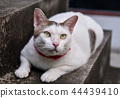 Portrait of cute cat lay down at stair 44439410