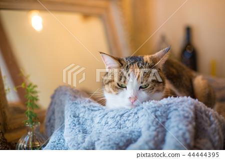 졸린 미케 고양이 씨의 이상한 얼굴 44444395