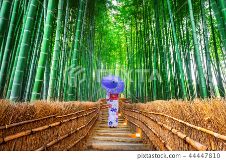 Bamboo Forest. 44447810