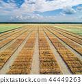 Aerial view of geometric wheat fields 44449263