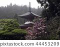 kongouzanmaiin, tahoto, two-storied pagoda 44453209