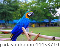 macaw parrot, blue - orange colorful beautiful 44453710