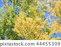 가을의 공원 가발 단풍 44455309