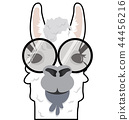 Head Alpaca funny vector 44456216