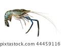 Image of fresh shrimp or lobster. Animal., Food. 44459116