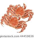 毛蟹2尾 44459636