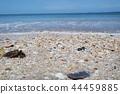 맑은 모래해변 44459885