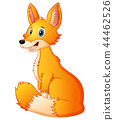 Vector illustration of Cute fox cartoon 44462526