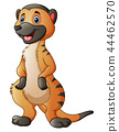 Vector illustration of Cute meerkat cartoon 44462570