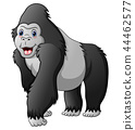 Cartoon funny gorilla 44462577