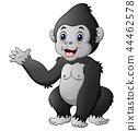 Cute baby gorilla 44462578