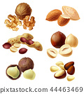 3d realistic set of various nuts 44463469