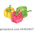 Three sweet Red, Yellow, Green Peppers 44463857