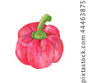 Fresh vegetables sweet red pepper. Watercolor 44463875