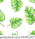 Tropical Green monstera leaves. Seamless 44465267