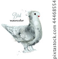 Dove watercolor Vector. Sweet bird painted 44468554