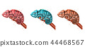 Chameleon watercolor Vector set. Colorful painted 44468567