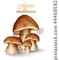 Mushrooms watercolor Vector isolated on white 44468582