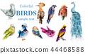 Colorful tropic birds set Vector watercolor 44468588