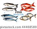 Watercolor colorful fish set collection Vector 44468589