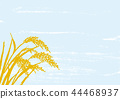 ear of rice, paddy, rice plant 44468937