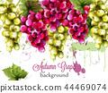 background, watercolor, grape 44469074