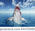 Great white shark leaping out of the water 44470089