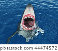 Great white shark leaping out of the water 44474572