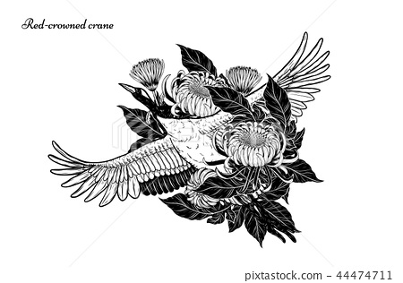 Red Crowned Crane Vector By Hand Drawing Stock Illustration