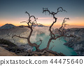 Dried tree on active volcano crater 44475640