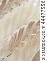 ซาชิมิปลากะพงขาว 44477556
