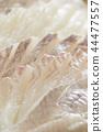 White fish Hirame sea bream sashimi 44477557