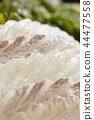 ซาชิมิปลากะพงขาว 44477558