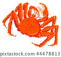 白色螃蟹有白色背景 44478813