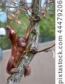 나무 타기 명인 44479206