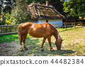 Horse Grazing in a Meadow  44482384
