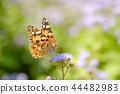 나비, 꽃, 플라워 44482983