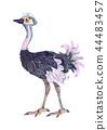 Ostrich. Cartoon illustration on white backdrop 44483457