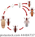 A termite life cycle 44484737