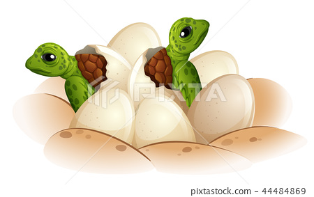 Turtle hatching the egg 44484869