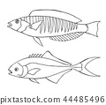 sketch line art fishes 44485496