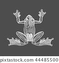 frog, drawing, sketch 44485500