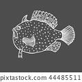 sketch, fish, funny 44485511