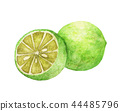 Watercolor hand drawn lime. 44485796