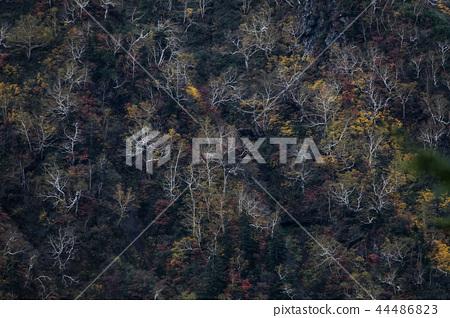 秋天彩色山脈 44486823