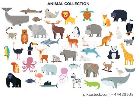 Big collection of wild jungle, savannah and forest animals, birds, marine mammals, fish.  44488938