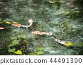 모네노이케, 모네의 연못, 기후 현 44491390